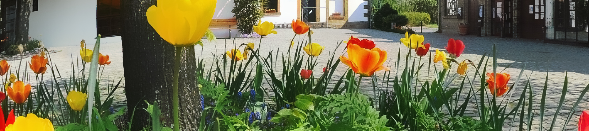 Tulpen am Bürgerzentrum